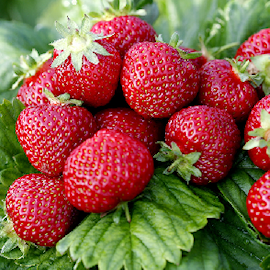 jordgubbe-zefyr-7cm-kruka-1