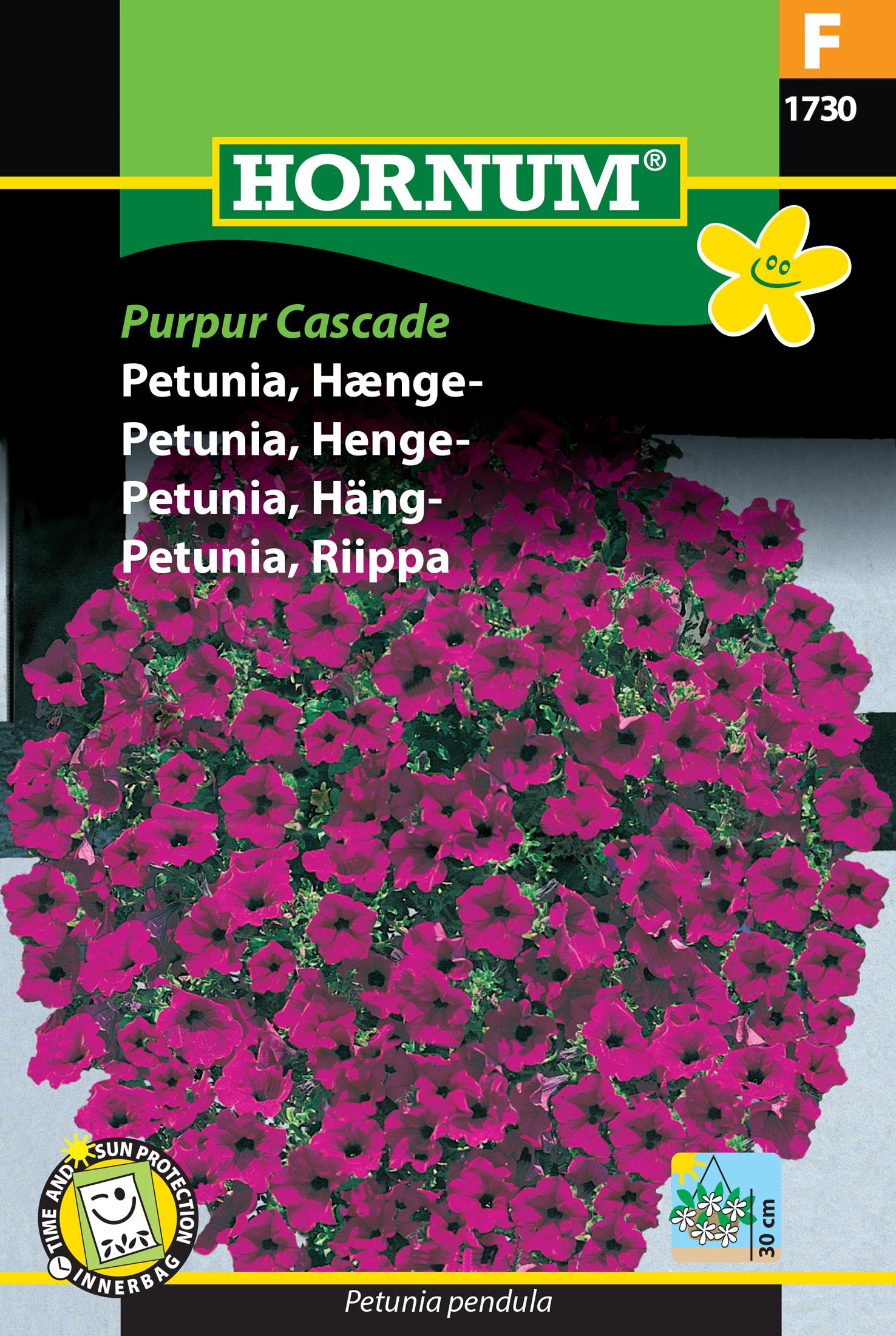 Petunia, Häng- 'Purpur Cascade