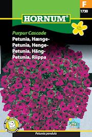 petunia-hng--purpur-cascade-1