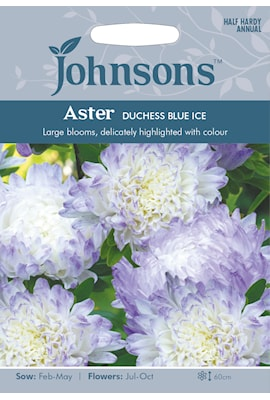 sommaraster-duchess-blue-ice-1