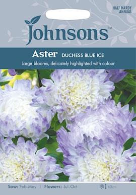 sommaraster-duchess-blue-ice-1
