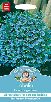 lobelia-cambridge-blue-1