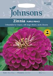 zinnia-purple-prince-1