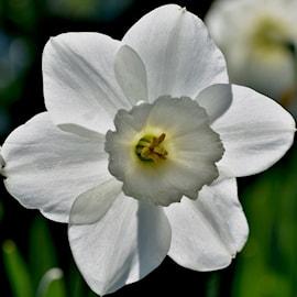stjrnnarciss-princess-zaide-5st-1