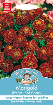 tagetes-red-cherry-1