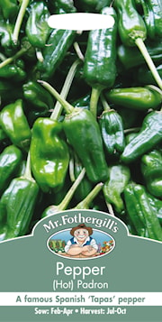 chili-hot-padron-1