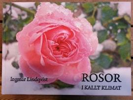 rosor-i-kallt-klimat-1