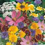 fjrilsmagneter---blandade-ettriga-blommor-2