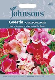 atlasblomma-azalea-double-mixed-1