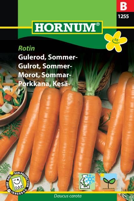 Morot, Sommar- Rotin