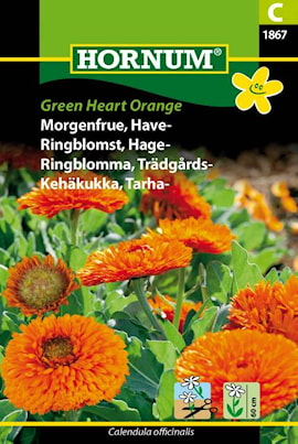 ringblomma-trdgrds--green-heart-orange-1