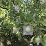 fruktform-nalle-2