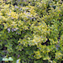 kltterbenved-emeraldn-gold-2-3l-3