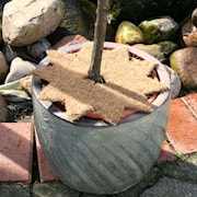 cocostern-star-natural-d35cm-1