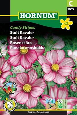 rosenskra-candy-stripes-1