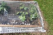 planteringstcke-plast-1