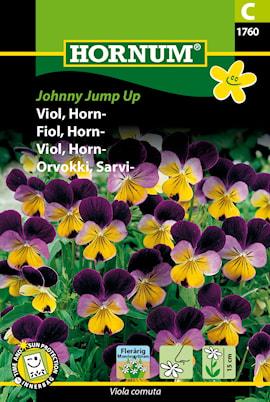 viol-horn--johnny-jump-up-1