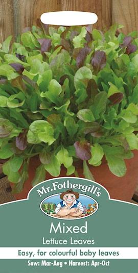 sallatsmix-lettuce-leaves-1