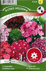 nejlika-borst--herald-of-spring-1