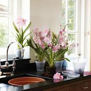 green-basics-orchid-15cm-transparent-1