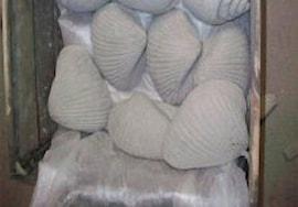 dekorations-mussla-cement-1st-1