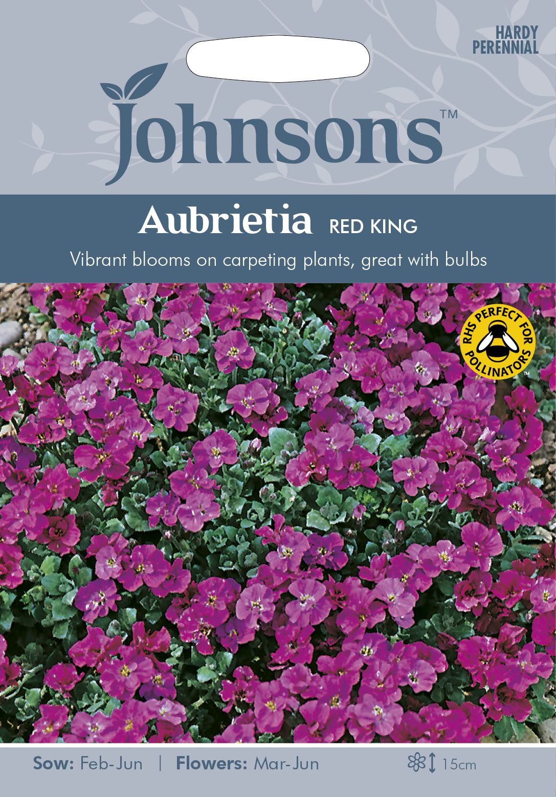 Aubretia 'Red King