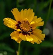 flickga-yellow-red-17-19cm-kruka-1