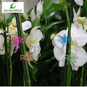 orkidklmma-slnda-neon-mix-5st-1
