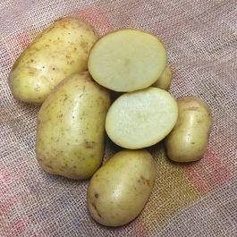 Potatis - Gatsby 1kg