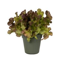 green-basics-growpot-dia-27-cm-leaf-green-1