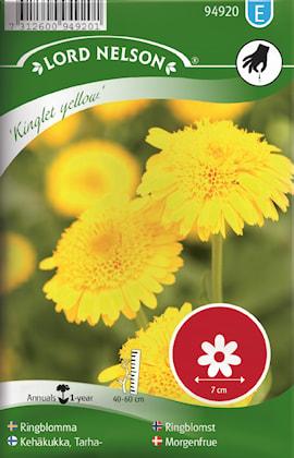 ringblomma-kinglet-yellow-1