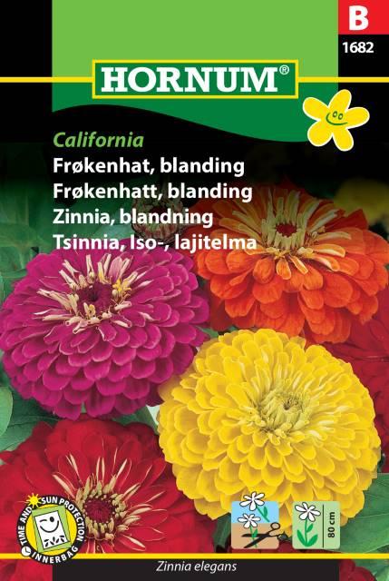 Zinnia, blandning California