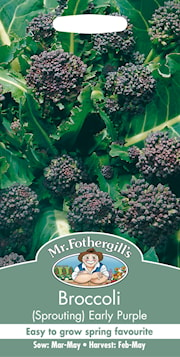 broccoli-early-purple-1