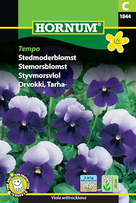 viol-styvmors--tempo-1