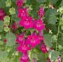 lejongapsranka-lofos-compact-pink-2