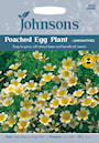 poached-egg-plant--limnanthes-1