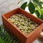 sproutly-eko-gula-rtor-500g-3