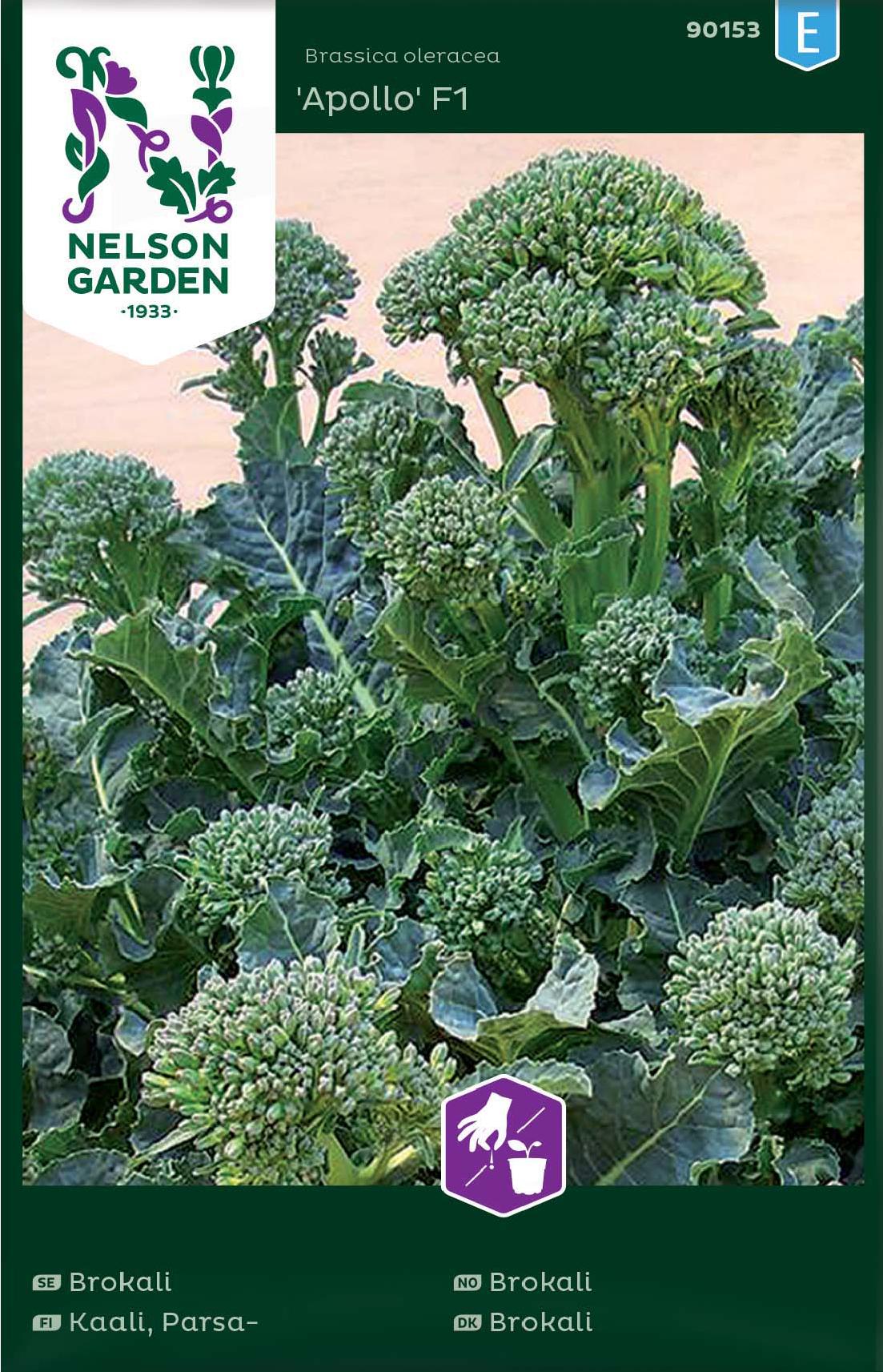 Broccoli 'Apollo F1