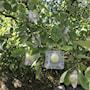 fruktform-nalle-7