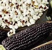 popcornmajs-negro-cine-12cm-kruka-1