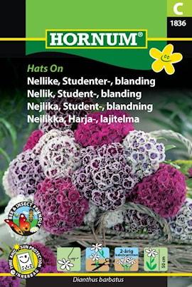 nejlika-student--blandning-hats-on-1