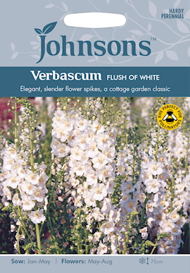 violkungsljus-flush-of-white-1