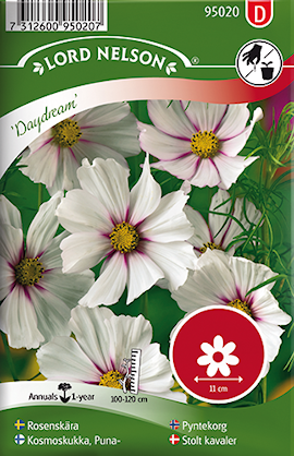 rosenskra-daydream-1