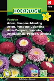 aster-pompon--blandning-1