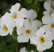 snflinga-megacopa-versa-white-105cm-kruka-1