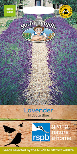 lavendel-hidcote-blue-strain-1
