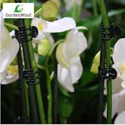 orkidklmma-mrkgrn-20st-1