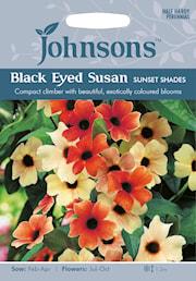 svartga-sunset-shades-1