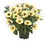 petunia-beautical-french-vanilla-105cm-kruka-3