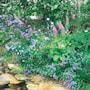 vildblomster-fr-skugga-woodland-mixture-6